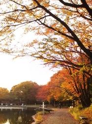 2010.11.16 紅葉