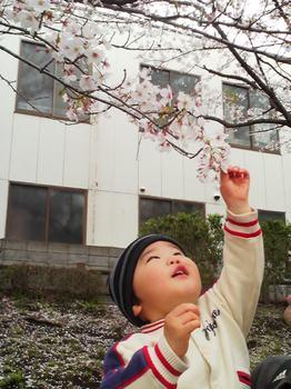 2014.04.05 お花見_江川せせらぎ緑道