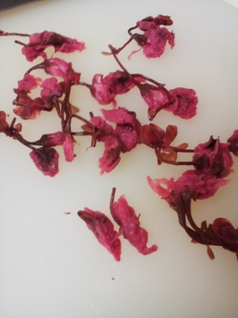 海の精_桜の花塩漬け