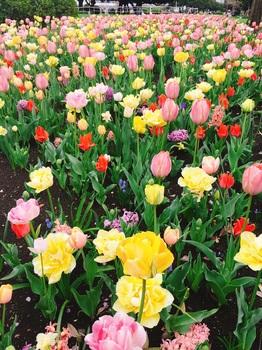 170412_Garden Necklace YOKOHAMA_2.JPG