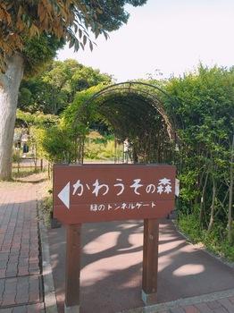 170602_三崎まぐろ_29.JPG