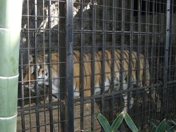 2012.11.10 野毛山動物園